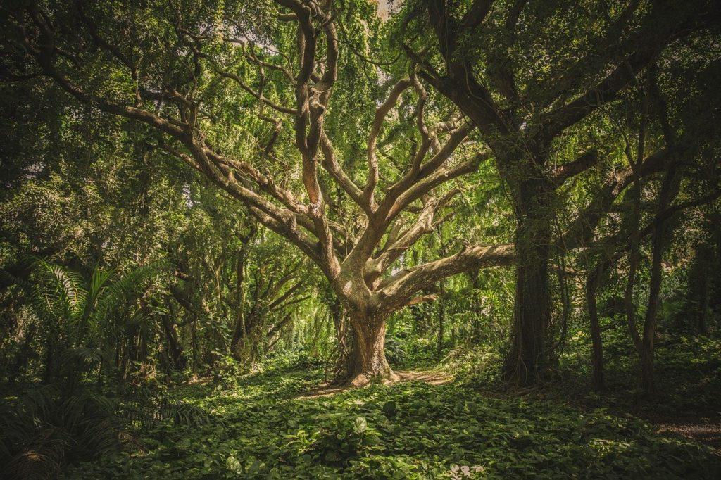 arbre empreinte carbone faguo podcast business positif agence cause