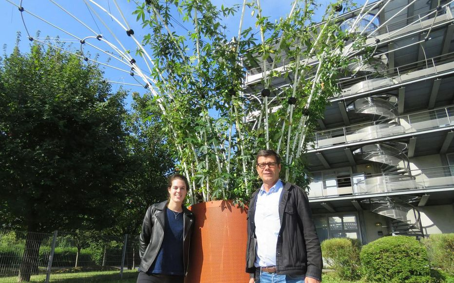 Hubert Michaudet et Elodie Grimoin Urban Canopee
